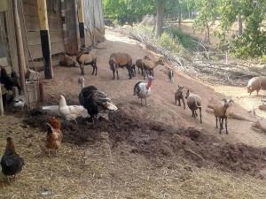 Kleintierbauernhof Wirth - Tiere